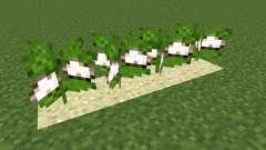 Desert Cotton Mod для Minecraft