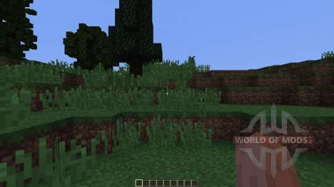 Pine island для Minecraft