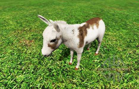 Animals для Farming Simulator 2015